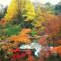 ◇色鮮やかな紅葉と白いお湯