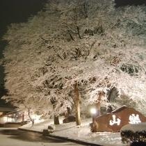 雪降る山楽の夜の情景