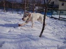 冬のドッグラン-1