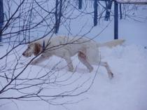冬のドッグラン-2
