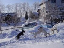 冬のドッグラン-5