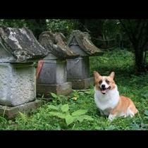 宿のすぐ裏手には桜の名所で有名な烏帽子山公園があります。