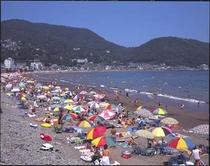 夏の伊東海岸海水浴風景