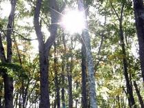 像の小道の木漏れ日