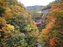 大石ダムの紅葉