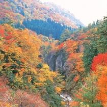 「紅葉川渓谷]見ごろは10月下旬~11月上旬。山寺の奥にある渓谷。立石寺とはまた違う魅力が◎
