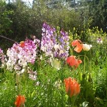 *春の庭の風景