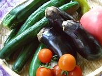 取り立て野菜