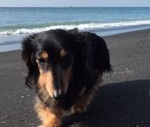 平砂浦海岸へお散歩♪