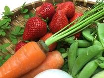 春野菜と採れたていちご♪