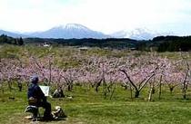 牟礼 丹霞郷桃の花