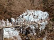 秩父郡小鹿野町尾の内渓谷の人口氷柱(1月上旬〜2月中旬)