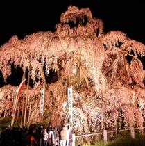 ★ライトアップされた日本三大桜【滝桜】