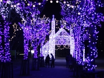 クリスマスには山口の市街地でイルミネーションが飾られます。