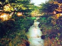 初夏は一の坂川でゲンジボタルが見られます。