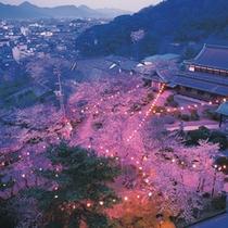 公会堂夜桜