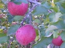 梓川リンゴ農園