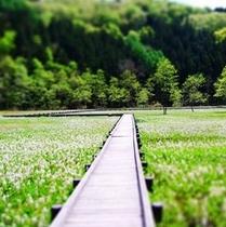 春 親海湿原 4×4