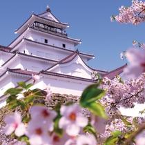 鶴ヶ城の桜