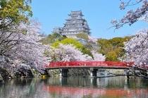 姫路城 春