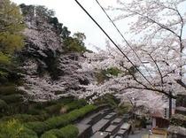 【温泉神社からの風景】