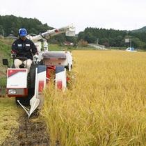 *田んぼ/近くでお米を育てています!丁寧に刈り取った後は皆さまのお膳へ♪