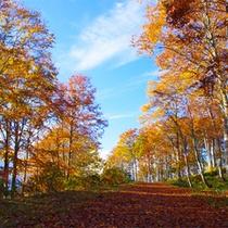 *ねずこの森トレッキング/おすすめトレッキングコース。白馬の森が美しく色付く季節の到来!