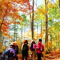 *ねずこの森トレッキング/色とりどりの鮮やかな木々が美しい!