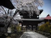 龍雲寺は武田信玄の墓。山門には天皇直筆の額。歩1分