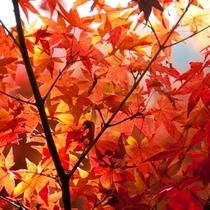 信州の紅葉は綺麗です!!