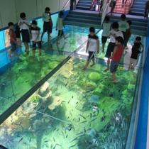 越前松島水族館 車で約15分!