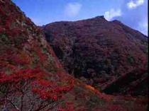 雲仙山系の紅葉