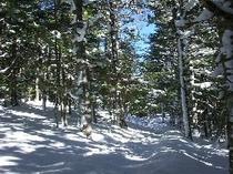 冬SShoeShirabiso300x225