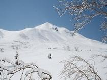 Mt.Norikura Kuraigahara w/birch
