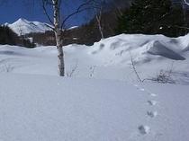 冬XCFPprintQ300x225