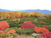 紅葉雲上位ヶ原