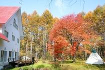 Backyard Autumn