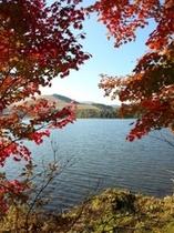 白樺湖と紅葉