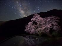 駒つなぎの桜と星空 2