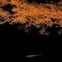 【紅葉】三夜沢赤城神社(見ごろは10月下旬から11月上旬頃となります。天候などで前後します。)