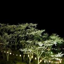 ゆたか台公園のソメイヨシノ