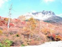茶臼岳をバックにした姥ヶ平の紅葉