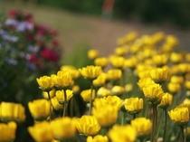 施設前 お花