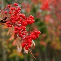 【秋〜季節の移り変わりを告げる赤い実】