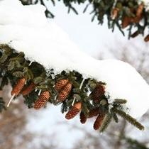 【冬〜雪帽子をかぶる木々】