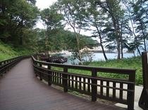 浄土ヶ浜ビジターセンターから続く遊歩道