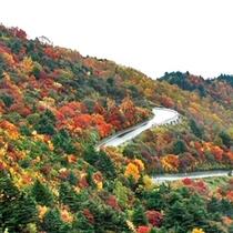 スカイラインの紅葉。例年では10月中旬〜11月下旬が見ごろです。(冬季閉鎖)