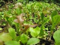 6. 美味しくて安全な食材が基本。温かい季節には我が家の小さな畑で育った野菜もテーブルに登場です。