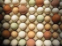 17. 季節限定「蕗の薹のピッツァ」はほろ苦い春の味です