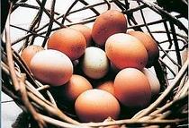 10. 自宅飼育のニワトリの生みたて卵100%使用だから安心安全です